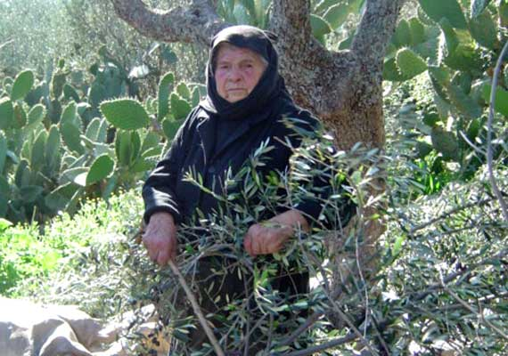 Our grandmother Dimitra, at the age of 89 during harvesting